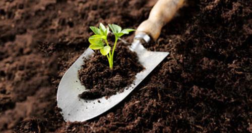 Tuinieren? Zo blijf je in vorm!